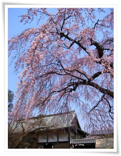 2011-03-30 喜多院 004