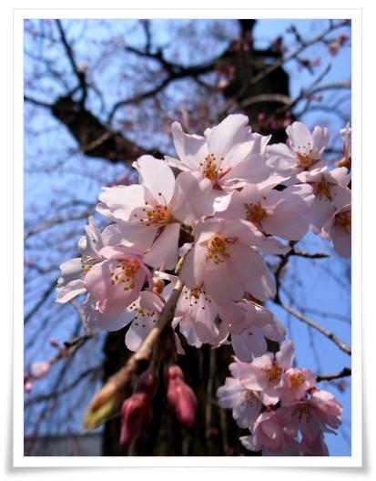 2011-03-30 榮林寺 008