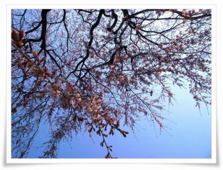 2011-03-30 光西寺 007