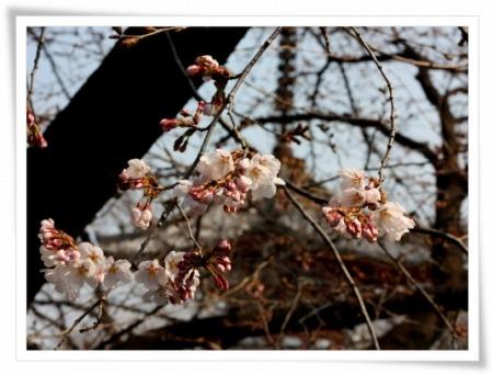 2011-03-30 喜多院 028
