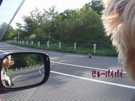 090917-kitune4.jpg