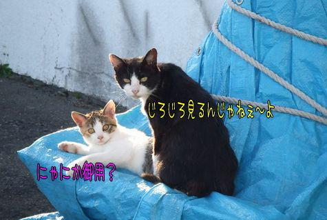 090920-neko1.jpg