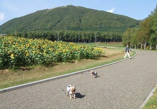 090925-niseko10.jpg