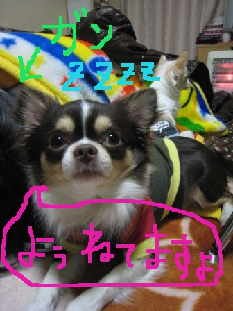 IMG_4872.jpg
