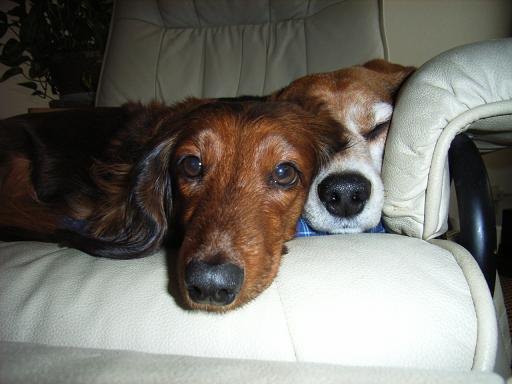 Bikky & Anny