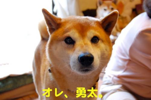 DSC_0010_20110516225359.jpg