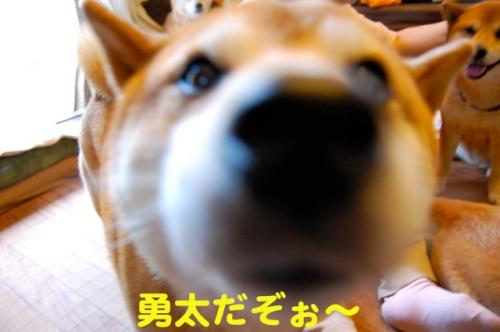 DSC_0013_20110516225643.jpg
