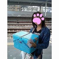新幹線で名古屋へ行くよ