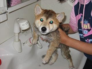 洗面台で洗えたよ
