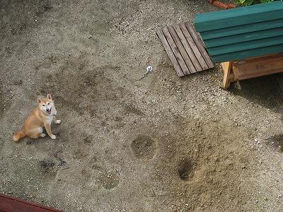 今日も掘っちゃいました!