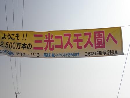 10月29日コスモス1