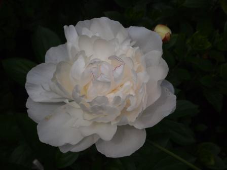 2011514r.jpg