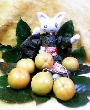 にゃあこごきげん!大島には柿が似合う