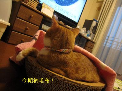 毛布&テレビ♪