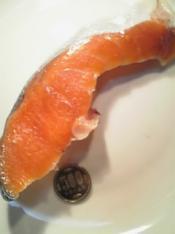 鮭フライ丼のお話001