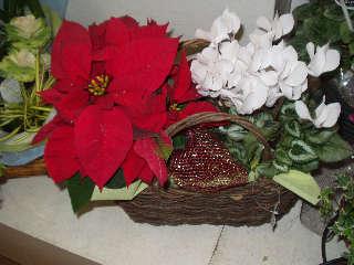 クリスマス花セット