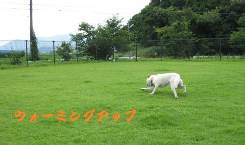 20110710-5.jpg