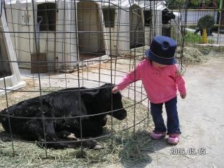 牛を触ったよ♪