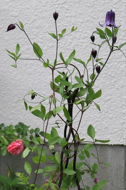 鉢植えの籠口