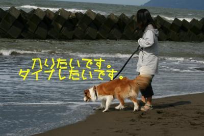 IMG_3525_sh01.jpg