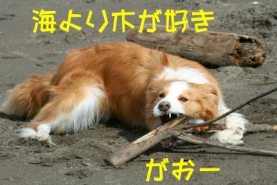 IMG_3543_sh01.jpg