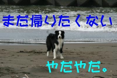 IMG_3652_sh01.jpg