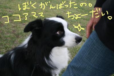 IMG_3818_20091019175430.jpg