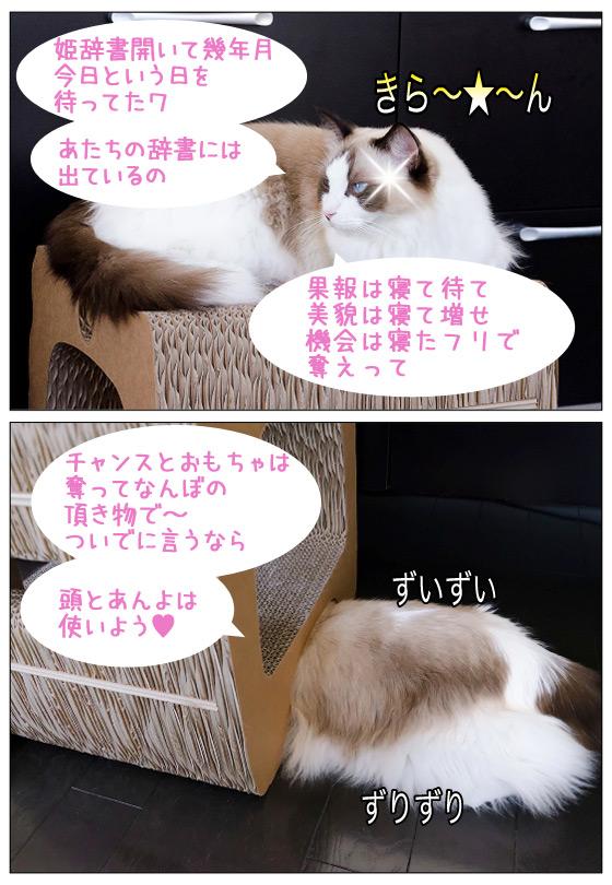 20120221_Page_04.jpg