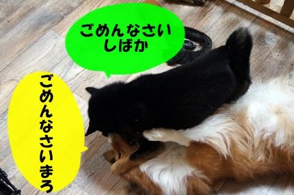 DSC01592.jpg