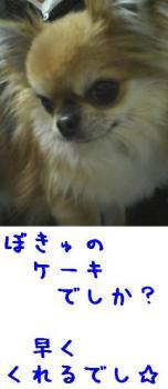 2007101910.jpg