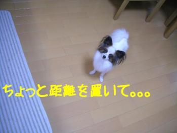 20071025110055.jpg