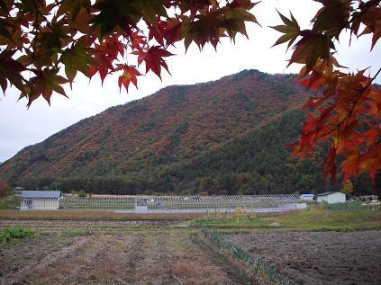 裏山(2009年 秋)
