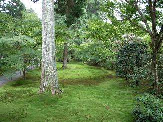 三千院苔の庭