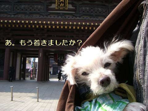 kawa_3.jpg