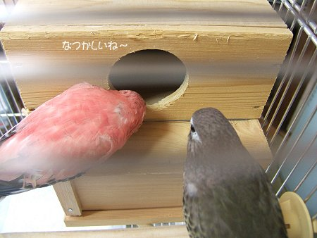りるぽ巣引き