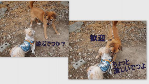 2011-05-0418_convert_20110521192957.jpg