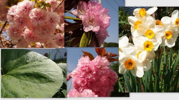 2011-05-041_convert_20110515001343.jpg