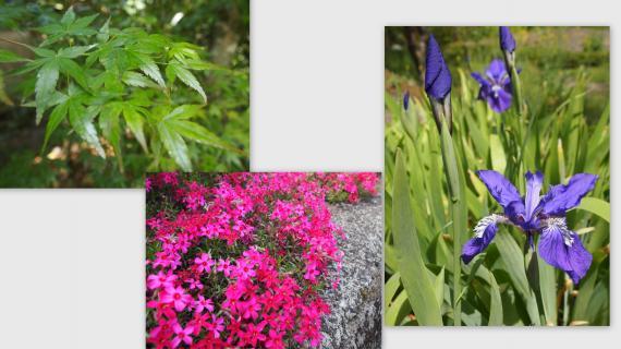 2011-05-05_convert_20110515001326.jpg