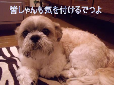 縲搾シ搾シ疋SCF8091_convert_20110517015510