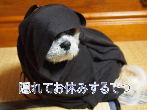 ・搾シ猶4082722_convert_20110517221407