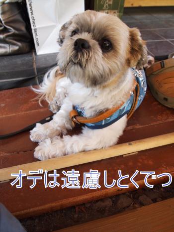 ・搾シ儕5053760_convert_20110521212245