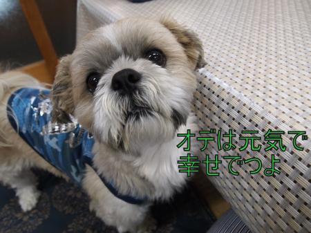 ・搾シ捻5043693_convert_20110521212625