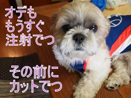 ・搾シ姫5214256_convert_20110524010432