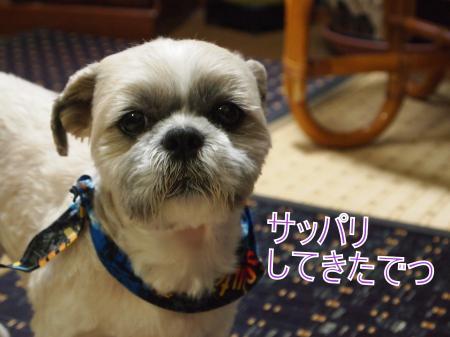 ・搾シ捻5274308_convert_20110528024859