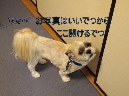 ・搾シ鳳5274311_convert_20110528024952