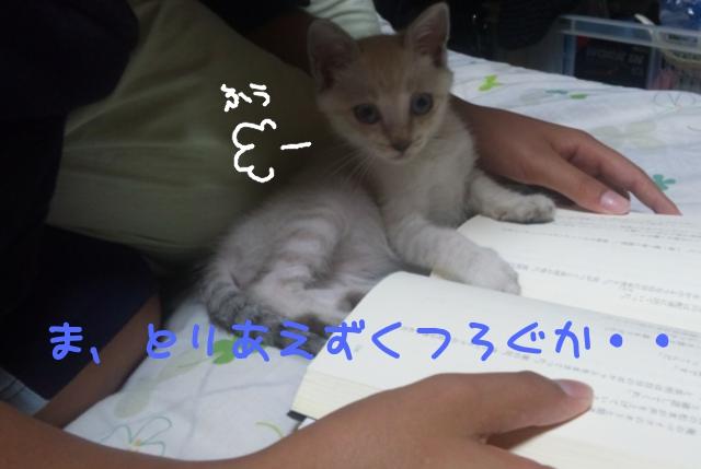 09-03-10--25.jpg