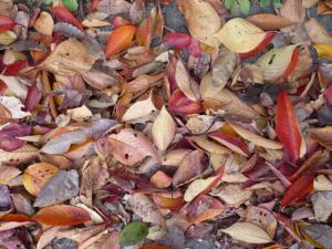 秋色セット