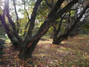 つたの絡まる樹