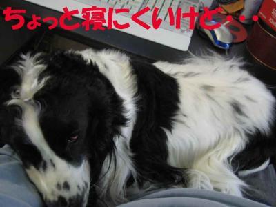 2007.11.19.2.jpg