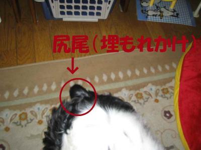2008-1-10-5_20080304025731.jpg